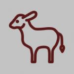 icon, calve