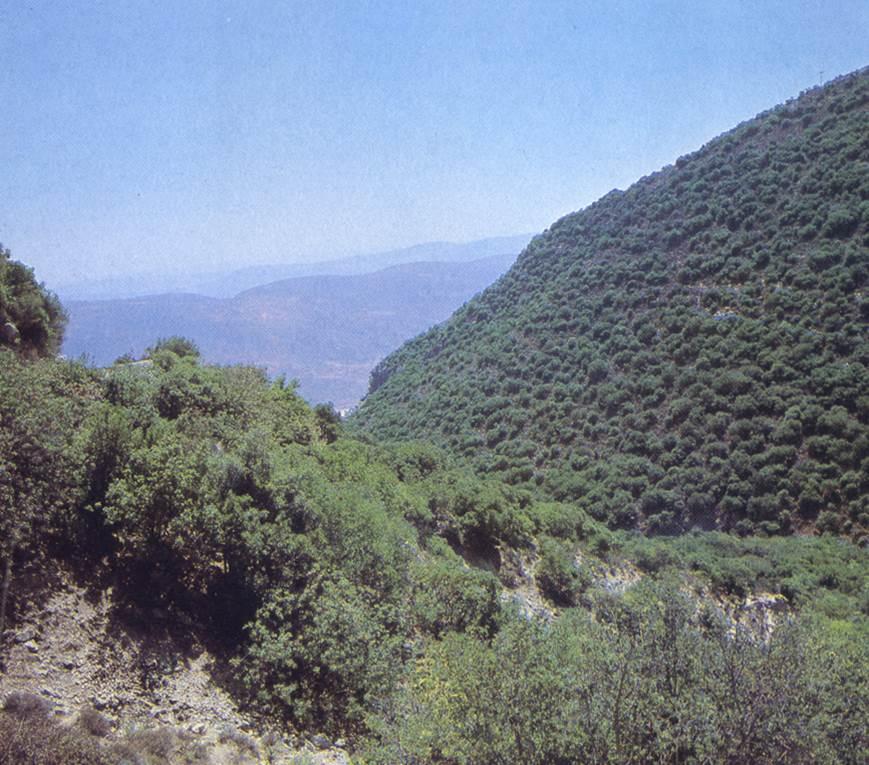 ya'ar, Upper Galilee