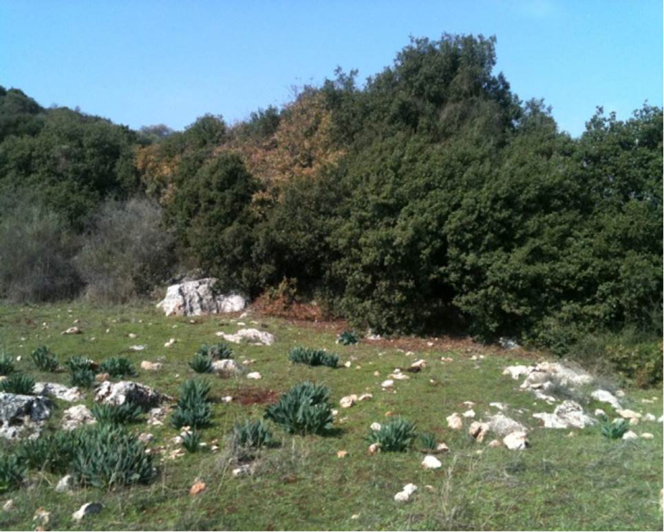 Mediterranean thicket, Upper Galilee; by Dalit Rom-Shiloni