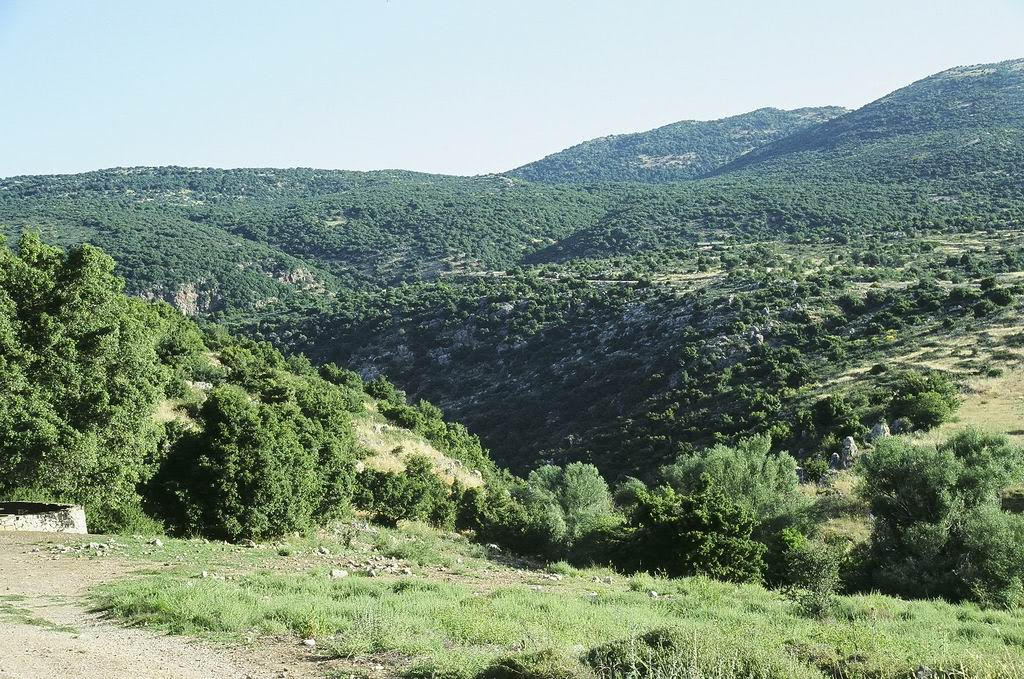 Palestine Oak Forest / Chapparal, The Hermon slopes; by Yoel Melamed
